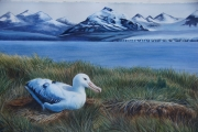 AlbatrossSerbin