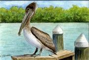 Brown-Pelican-Pelicanus-occidentalis
