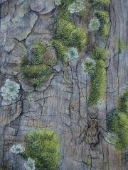 Bark-Mantid